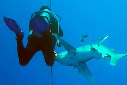 El aterrador momento en que un tiburón muerde con sus afilados dientes la pierna de un submarinista (VÍDEO)