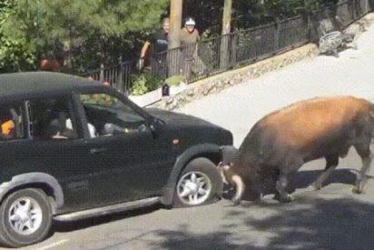 Un toro y un coche se enfrentan; ¿quién crees que gana?