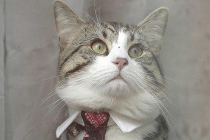 WikiLeaks distribuye imágenes del gato de Julian Assange mirando la detención de su dueño