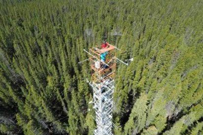 Consiguen estudiar el crecimiento de los árboles de hojas perennes