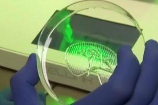 Crean órganos humanos con impresoras 3D