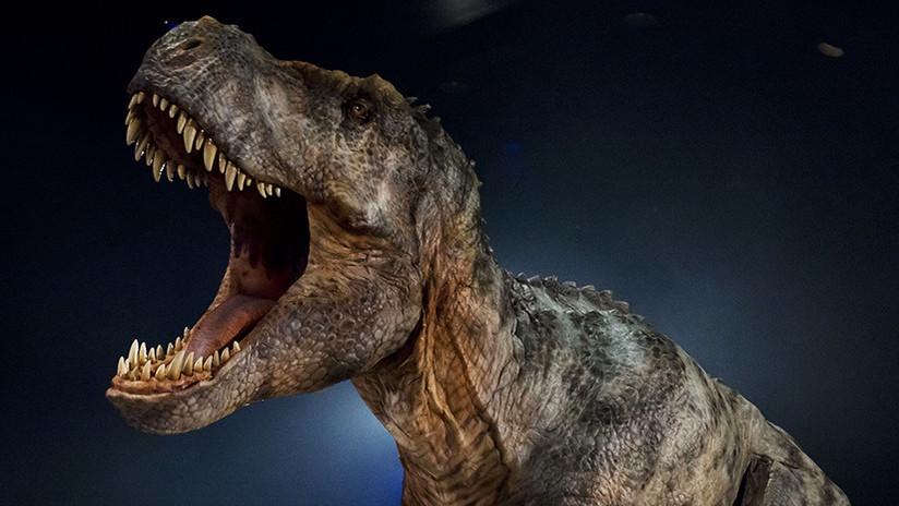 Los T-Rex jóvenes sometían a especies rivales más pequeñas
