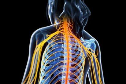 Culpable: Identifican la molécula responsable de las recaídas de la esclerosis múltiple