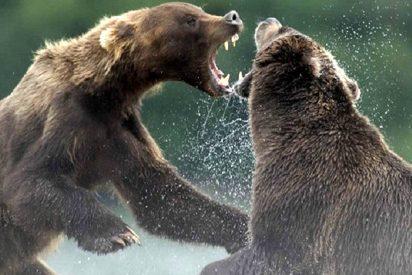 Escucha rugidos en su jardín y descubre a dos osos enzarzados en una feroz pelea