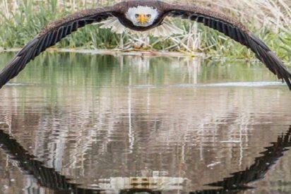 La majestuosa imagen de una preciosa águila calva del canadiense Steve Biro