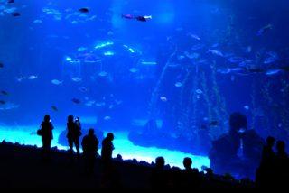 """El """"Poema del Mar"""" cuenta con el cristal curvo más grande del mundo"""