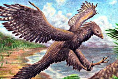 Jurásico: El trono de Archaeopteryx se tambalea