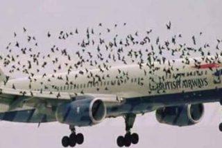 Conducta: las relaciones sociales prevalecen en las bandadas de aves