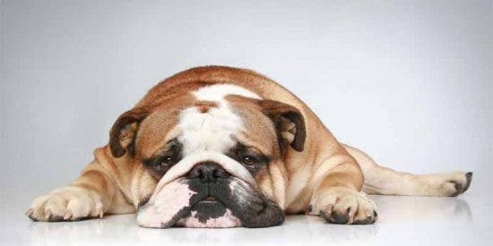 Mi perro es de Podemos...