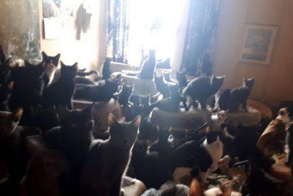 Más de 300 gatos viven en un pequeño apartamento de EEUU