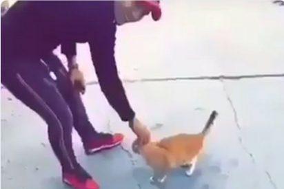 Pagarán 6.000 dólares a quien identifique al criminal que pateó a un gato que pedía amor