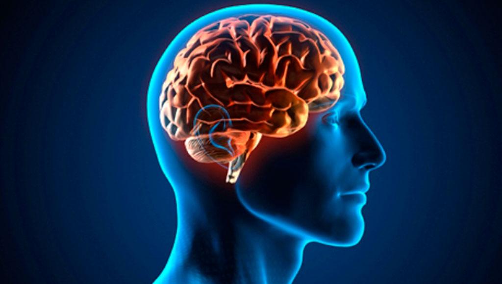 ¿Sabías que el ajo protege tu cerebro y retrasa el envejecimiento?