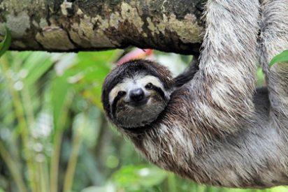 Diez cosas que debes hacer si viajas a Costa Rica