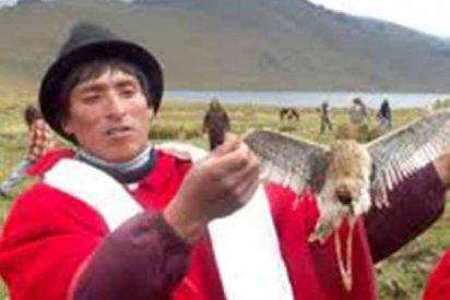 El suicidio en masa de los pájaros de los cuvivíes: un misterio para la ciencia