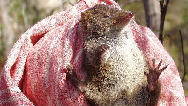 Un estudio en ratones demuestra que la segmentación del sistema funcional del intestino ayuda a eliminar patógenos