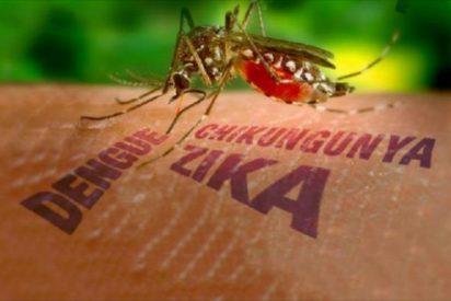 La anakinra, un fármaco de la artritis reumatoide consigue disminuir las muertes y defectos de nacimiento por virus Zika