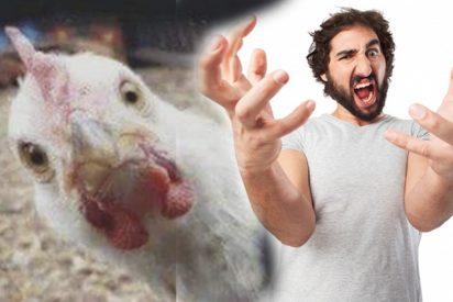 """""""¿A qué venís?"""": Un pastor cabreado responde esto ante el cierre de sus gallinero que molestaba a un hotel rural cercano"""