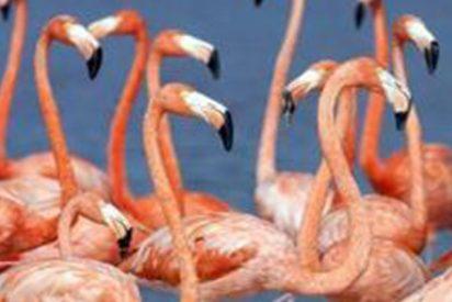 Un Zoo se ve obligado a sacrificar a un flamenco tras recibir una pedrada de un niño