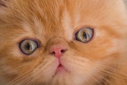 Una gata pierde la paciencia ante la indecisión de su cría y hace esto…