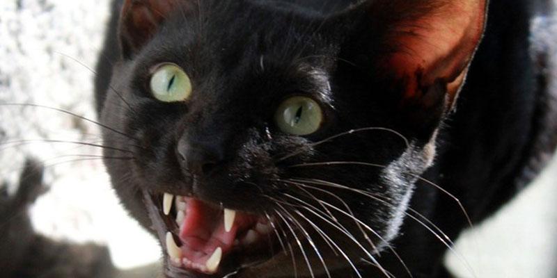 Hospital se 'ceba' con un paciente: Le cobran 2.300 dólares por rasguños de gato