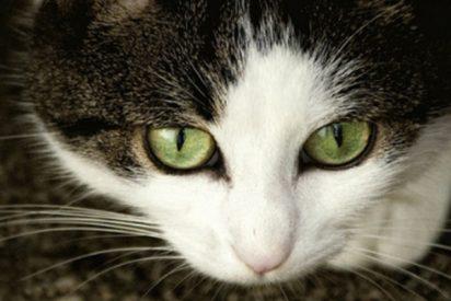 """El vídeo que demuestra que el gato es el """"peor enemigo"""" de un cartero"""
