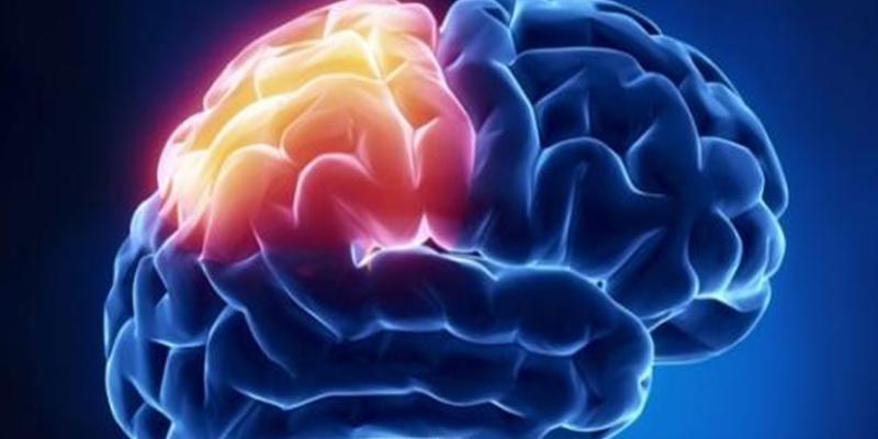 Cerebro: Vida saludable y controlar los factores de riesgo vascular, fundamental para prevenir el ictus cerebral