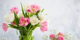 ¿Qué flores regalar en verano?
