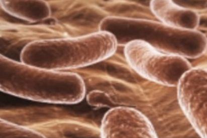 'Klebsiella', la superbacteria que resiste a muchos antibióticos y se contagia en los hospitales