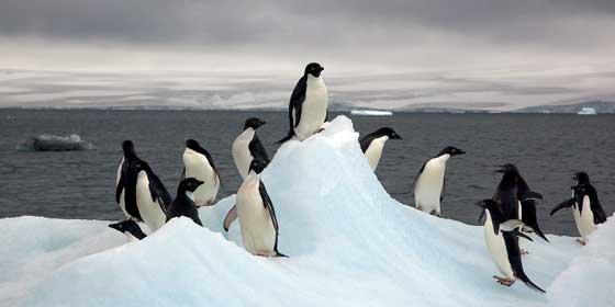 Clima: Sorprendentes patrones de fusión bajo la mayor plataforma de hielo