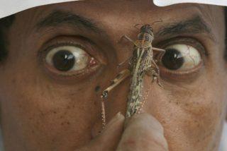 (VIDEOS): Plaga bíblica; Invasión de langostas en una ciudad de Arabia Saudita