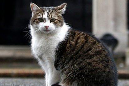 Interrumpen el descanso del gato Larry de Downing Street ante el anuncio de dimisión de May