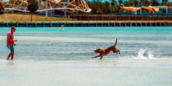 ¿Puedo viajar a Miami con mi perro?