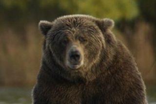 Un hombre consigue sobrevivir al ataque de un oso pardo apuñalándolo con una navaja de bolsillo