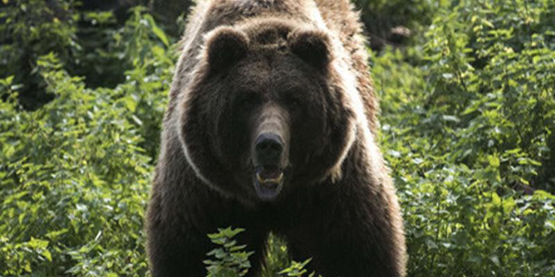 Vídeo: Empuja por la espalda a un oso salvaje y la bestia le atraviesa la mano de un mordisco