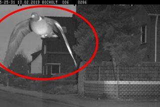 ¿Van a multar a esta paloma que hizo saltar el radar de la cámara de tráfico por exceso de velocidad?