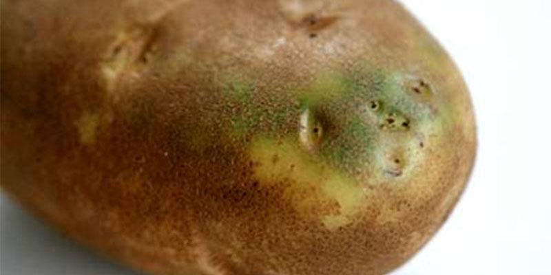 Las patatas te pueden matar: cuando las verdes se vuelven tóxicas