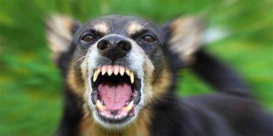 Una jauría de perros descuartiza a un joven y lo deja moribundo en Málaga