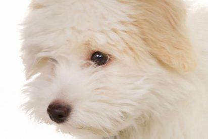 La feroz lucha de una pareja por la custodia del perro Cachas