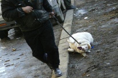 Un policía da una lección a una mujer que maltrataba a su perro