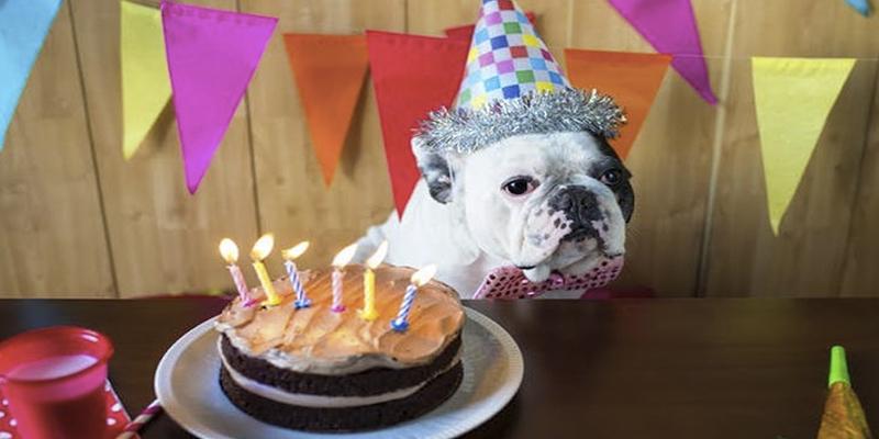 ¿Qué edad tiene mi mascota en años humanos? Un veterinario nos lo explica