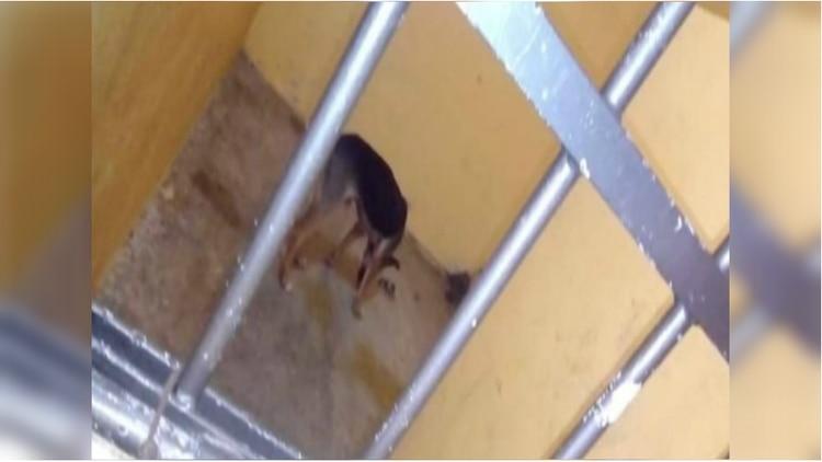 México: Alcalde mete a un perro en la cárcel porque mordió a una mujer que lo molestaba
