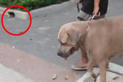 Este perro intenta morder a las crías de una gata y se lleva una gran lección…