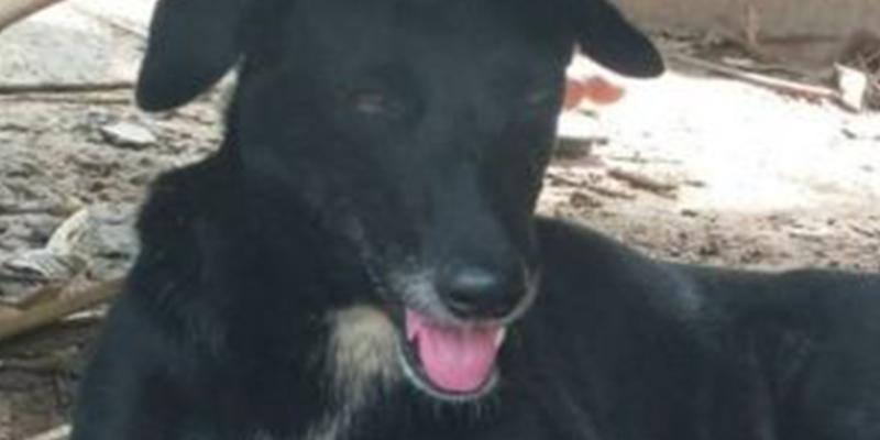 Ping Pong, el super perro que rescató a un bebé que su madre había enterrado vivo