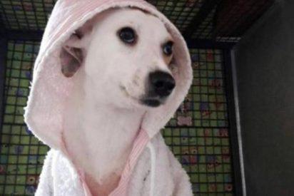 Esta es Rosita, la perra callejera que fue despellejada y sobrevivió