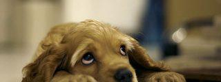 ¿Sabías que 140.000 mascotas son abandonadas cada año en España?