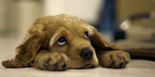 ¿Puedo llevar a mi perro a un resort en Isla Mujeres?