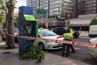 Herido grave un taxista en Madrid al caerle encima una gran rama de un árbol rota por el viento