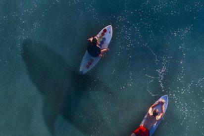 (VIDEO): Un tiburón persigue a este nadador que no se da cuenta del peligro
