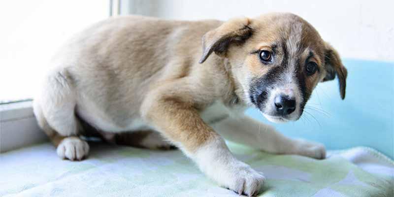 Mata a golpes a su perro y lo tira a la basura, pero lo pilla la Guardia Civil