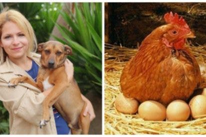 """¿De qué sórdida granja recluta el Pacma a sus candidatos? """"Comer huevo es tan cruel como comerse al pollo"""""""
